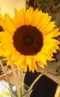 Sunshine inside